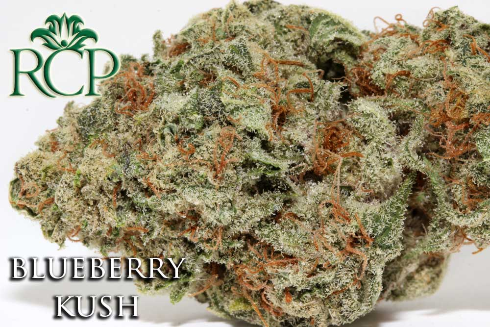 Sacramento Medical Marijuana Dispensary Cannabis Club Strain BLUEBERRY KUSH