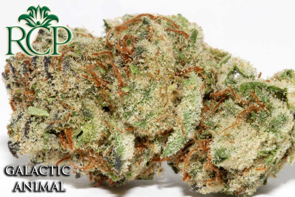 Sacramento MMJ Dispensary Strain GALACTIC ANIMAL