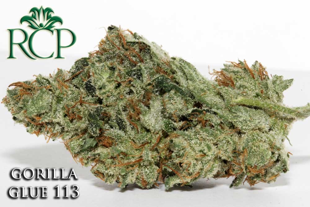 Sacramento Medical Marijuana Dispensary Cannabis Club Strain GORILLA GLUE 113