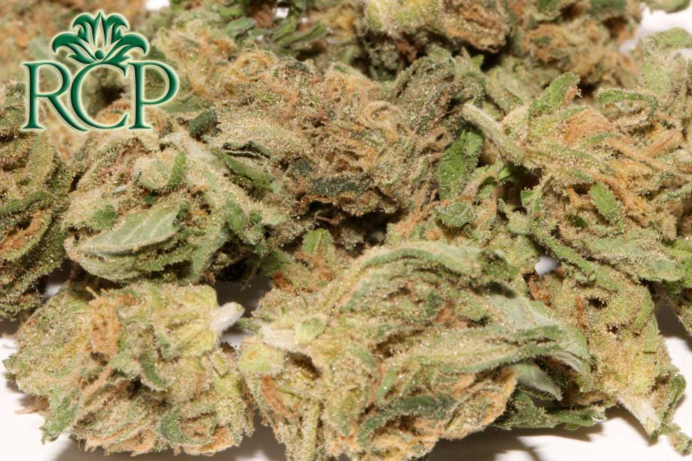 Sacramento Medical Marijuana Dispensary Cannabis Club Strain BLUE DREAM SMALLS