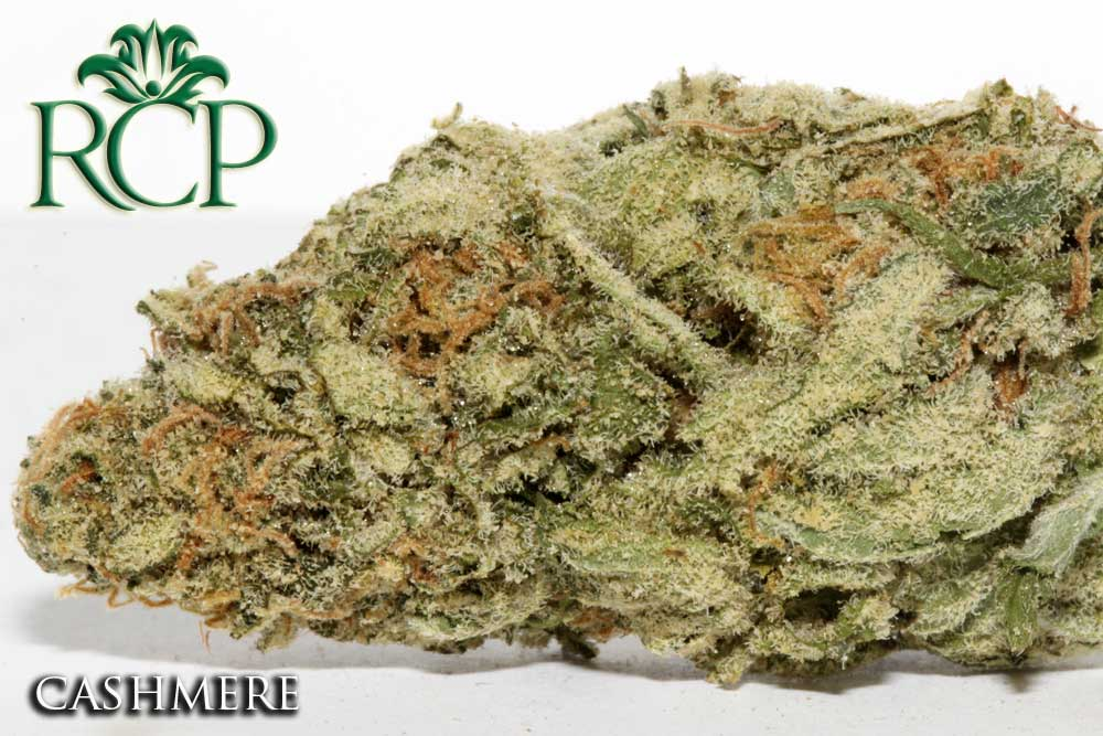 Sacramento Medical Marijuana Dispensary Cannabis Club Strain CASHMERE