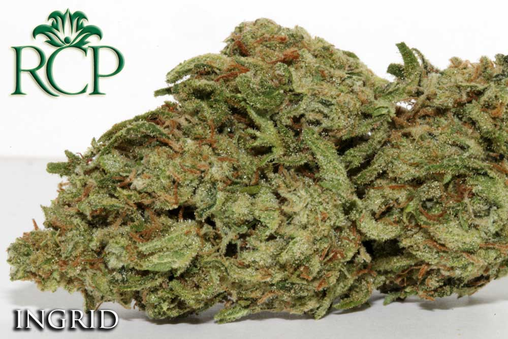 Sacramento Medical Marijuana Dispensary Cannabis Club Strain INGRID