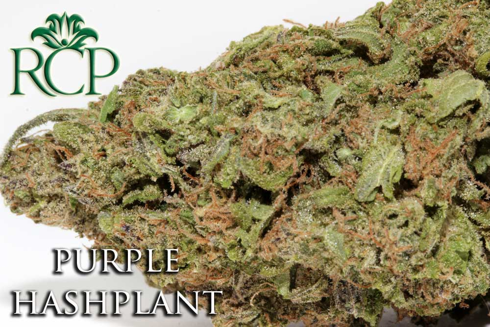 Sacramento Medical Marijuana Dispensary Cannabis Club Strain PURPLE HASHPLANT