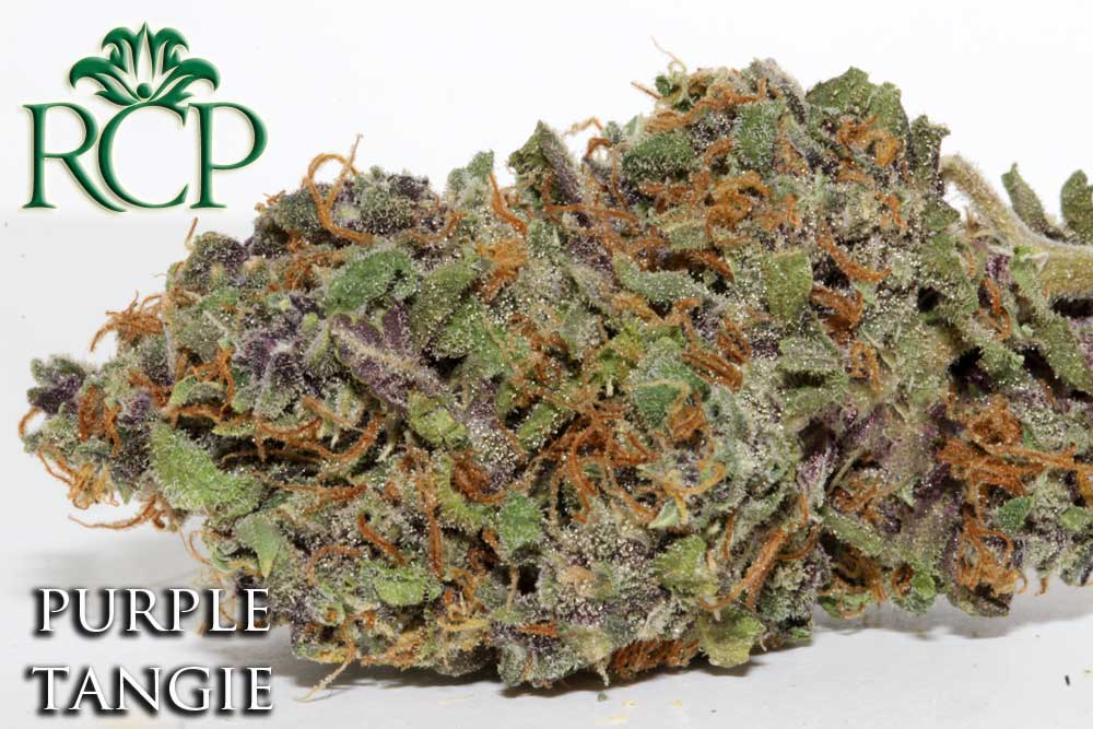 Sacramento Medical Marijuana Dispensary Cannabis Club Strain PURPLE TANGIE